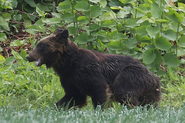 自衛隊にクマ襲来 その対応の法的根拠は何になる? 武器使用が認められるにも条件アリ