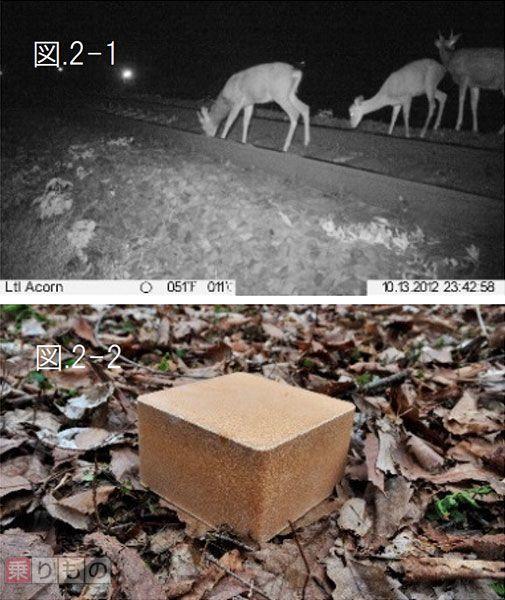 Large 151013 deer 01