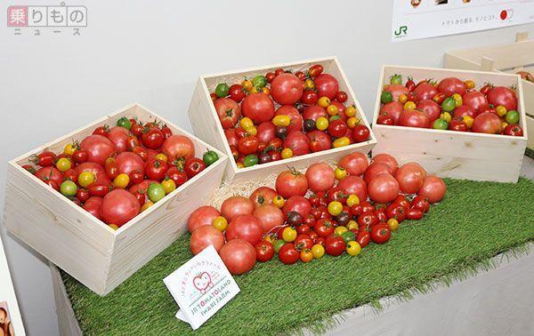 Large 160921 tomato 01