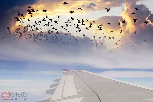 Large 170905 birdstrike 01