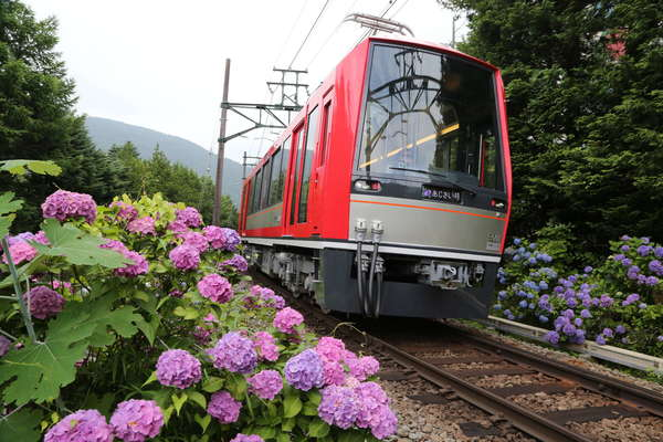 Large 210413 hakone 01